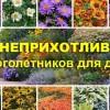 Самые неприхотливые и красивые многолетники для дачи: 10 популярных растений