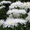 Ландшафтный дизайн в примерах: 30 фото белого «лунного» сада