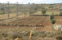 Выкуп земли сельскохозяйственного назначения