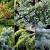 Преимущества использования хвойных растений для дополнения ландшафтного оформления сада