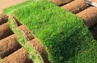 Возможности использования рулонных газонов