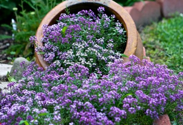 Каталог многолетних цветов с фото и названиями
