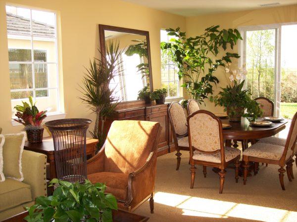 Много зелени в гостиной оживят комнату